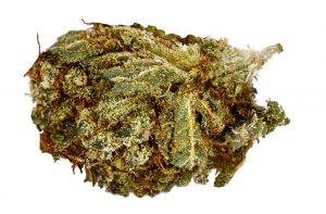 100 OG Marijuana strain