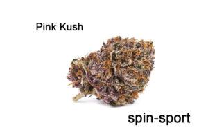 Pink Kush Marijuana Strain