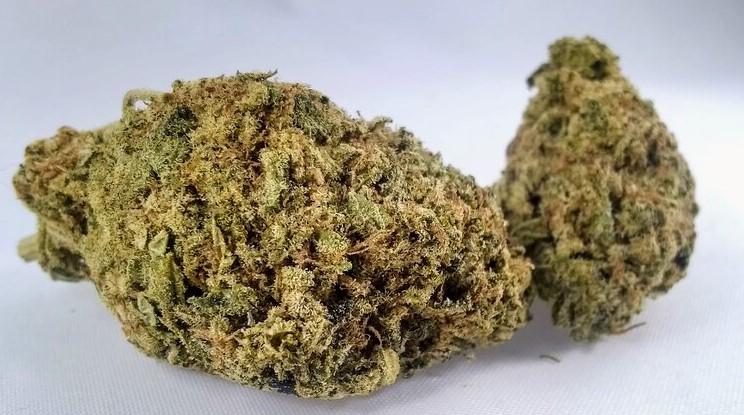 Willy Wonka special Sativa strain
