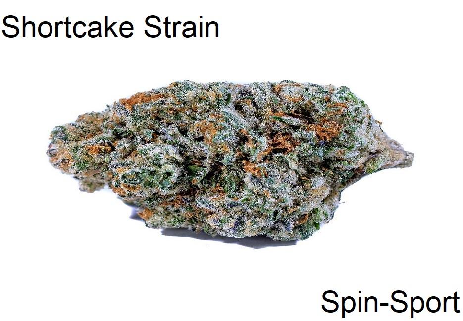 Shortcake Strain