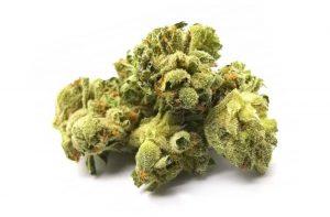 Alien Dawg Marijuana Strain
