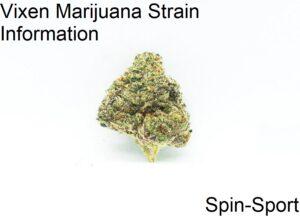 Vixen Marijuana Strain Information