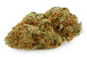 Colombian Gold Cannabis Strain