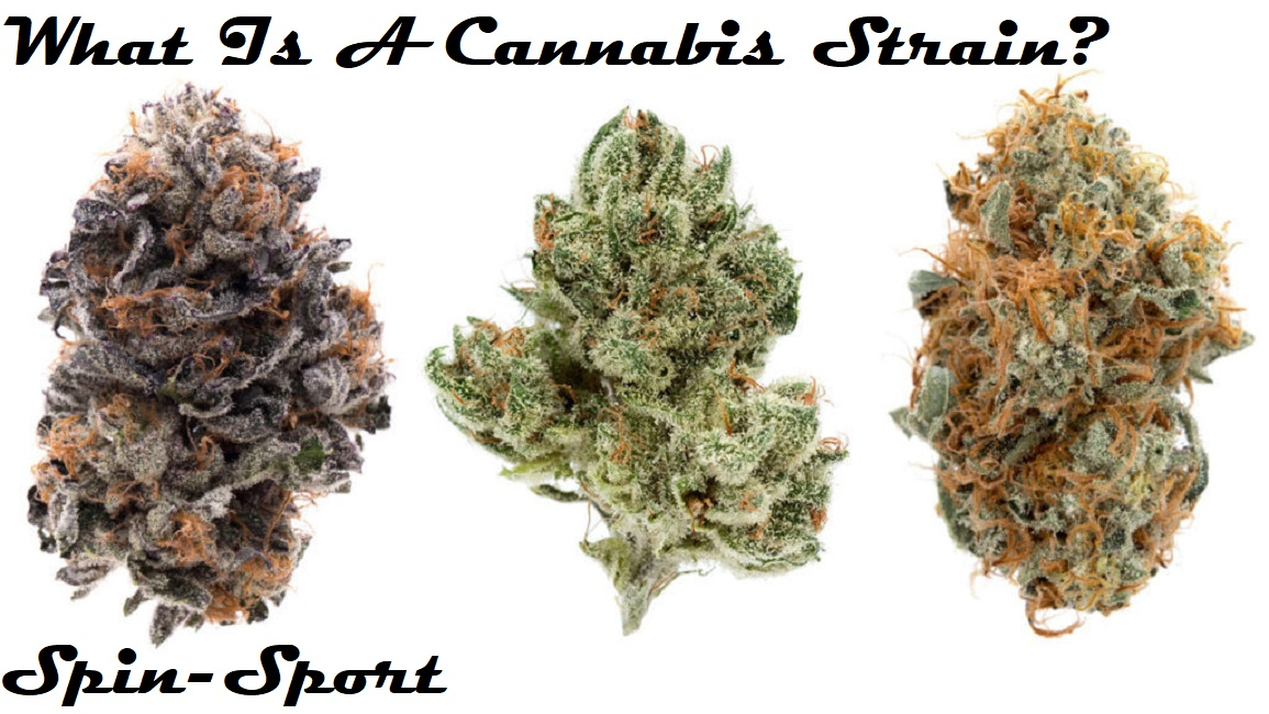 What Is A Cannabis Strain?