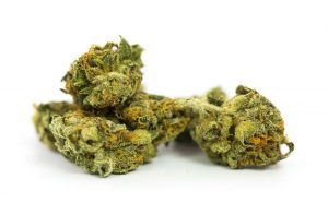 Jamaican Marijuana Strain