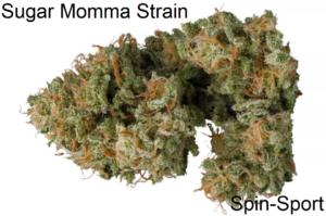 Sugar Momma Strain