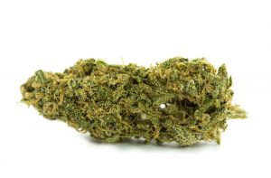 Animal Cookies Marijuana Strain