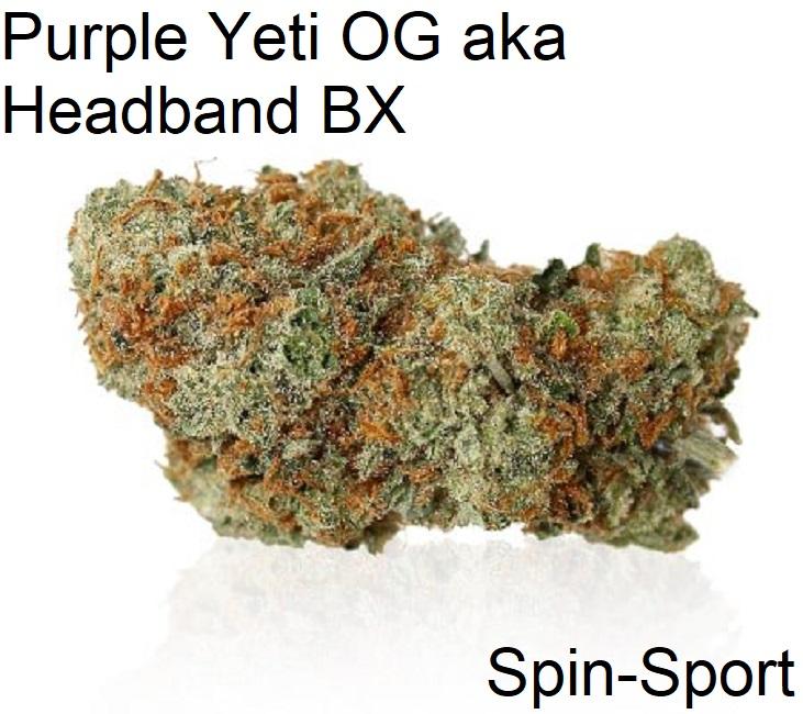 Purple Yeti OG aka Headband BX