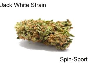 Jack White Strain