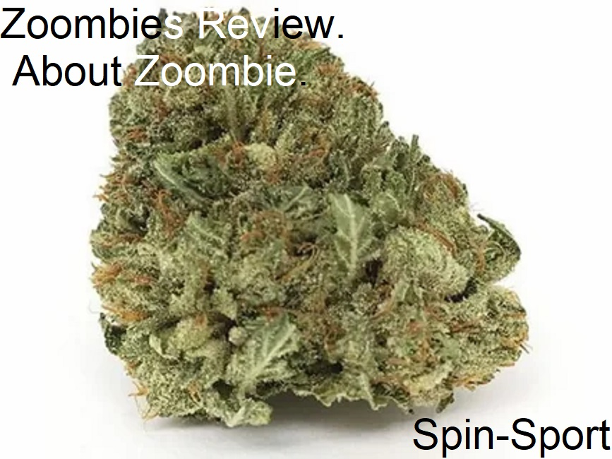 Zoombies Review. About Zoombie.