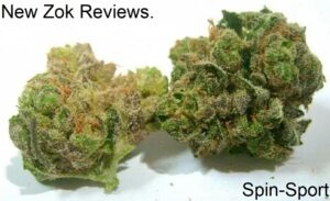 New Zok Reviews.