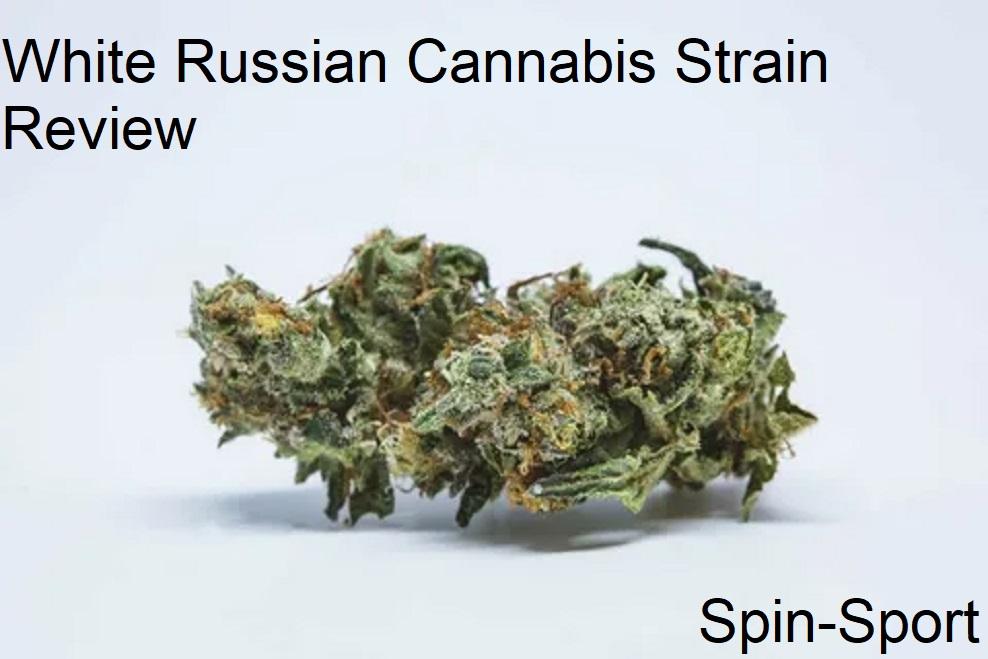 White Russian Cannabis Strain Review