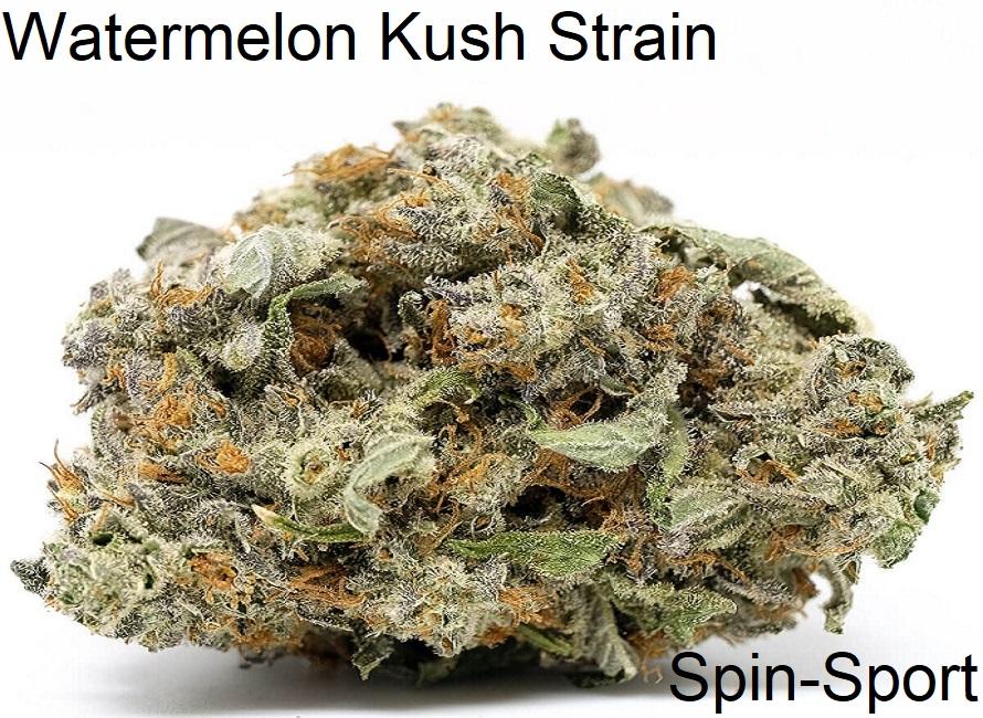 Watermelon Kush Strain