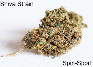 Shiva Strain