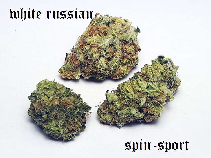 White Russian Cannabis Strain Review