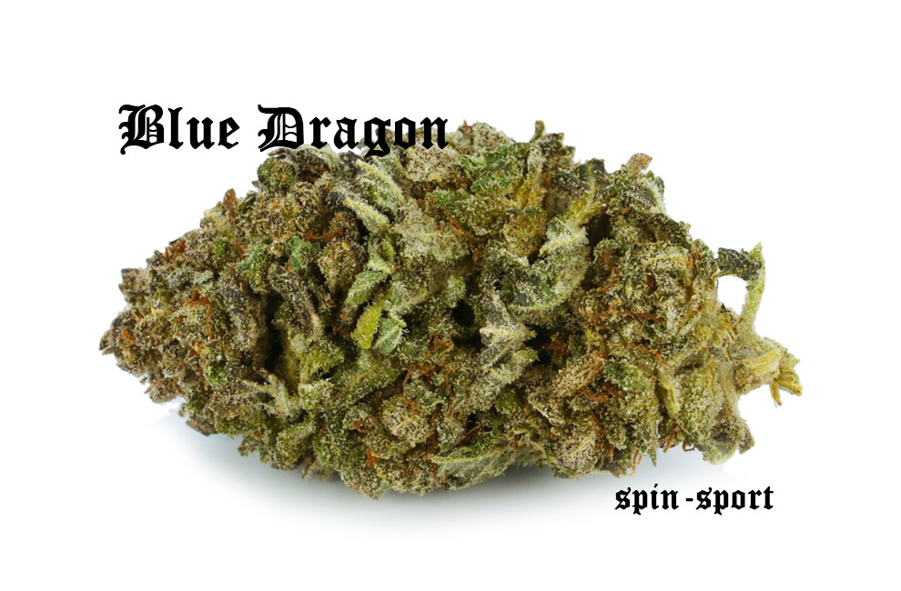 Blue Dragon Marijuana Strain