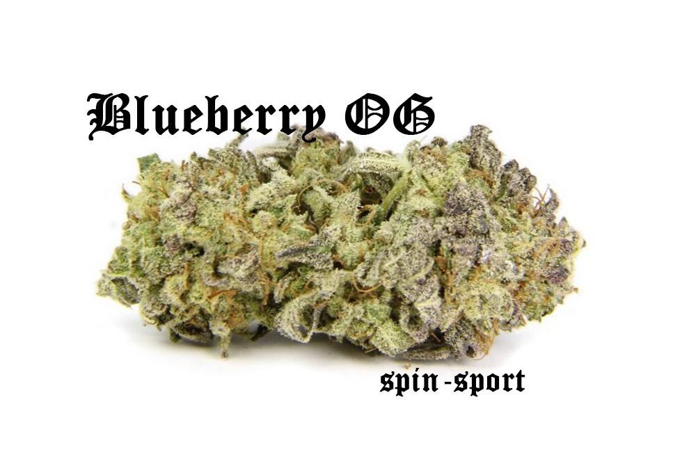 Blueberry OG Marijuana Strain