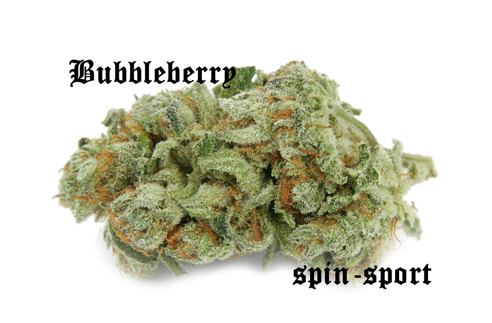 Bubbleberry Marijuana Strain