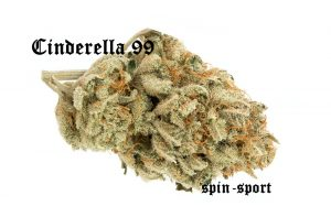 Cinderella 99 Marijuana Strain