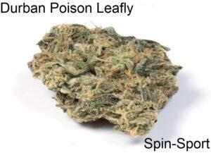 Durban Poison Leafly