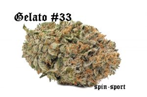 Gelato #33 Marijuana Strain