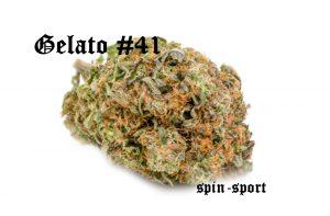 Gelato #41 Marijuana Strain
