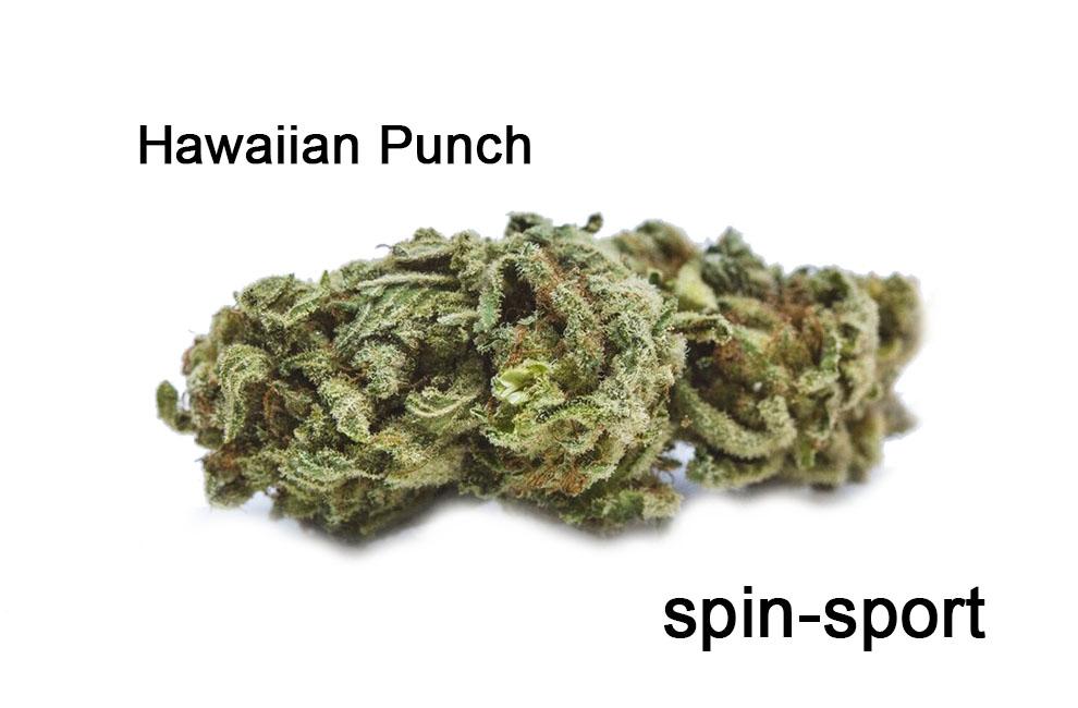 Hawaiian Punch Strain Information