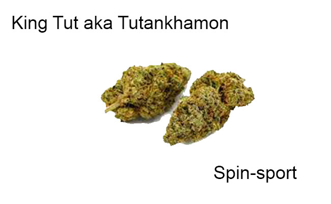 King Tut aka Tutankhamon Marijuana Strain Information