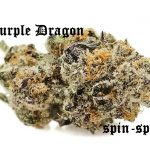 Purple Dragon Marijuana Strain