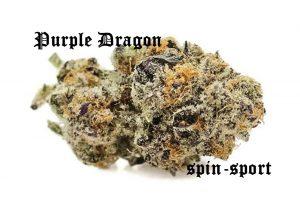 Purple Dragon Marijuana Strain