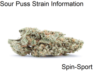 Sour Puss Strain Information