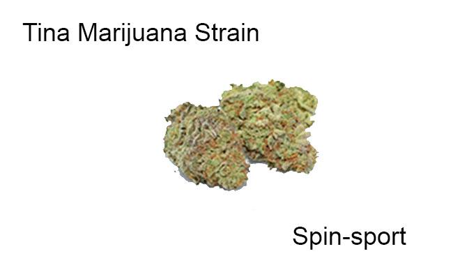 Tina Marijuana Strain Information