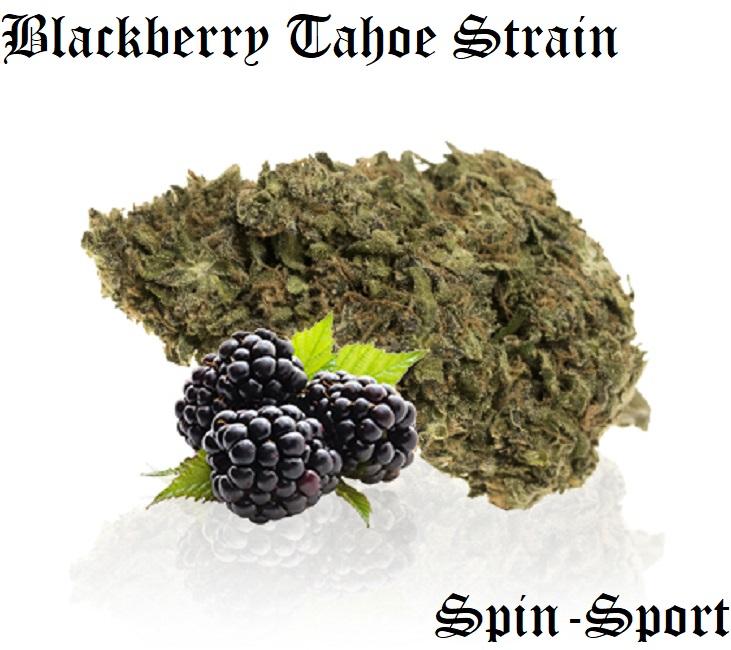 Blackberry Tahoe Strain