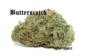 Butterscotch Marijuana Strain