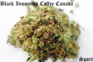 Black Insomnia Coffee Canada