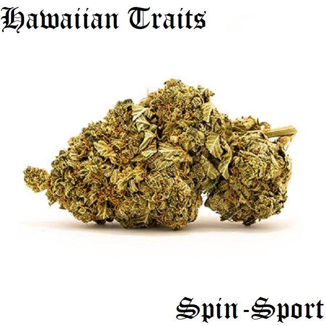 Hawaiian Traits