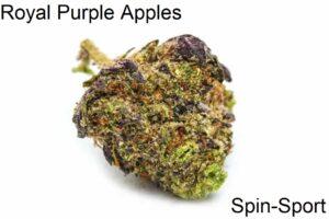 Royal Purple Apples