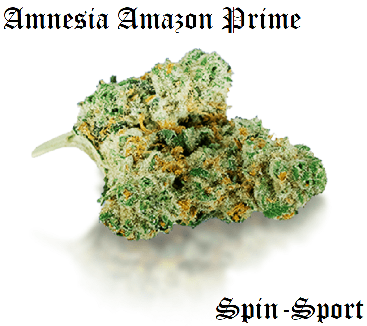 Amnesia Amazon Prime