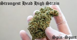 Strongest Head High Strain