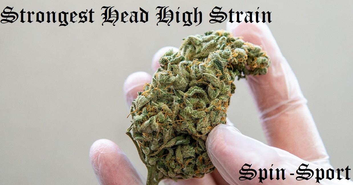 Strongest Head High Strain