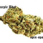 Purple Thai Marijuana Strain