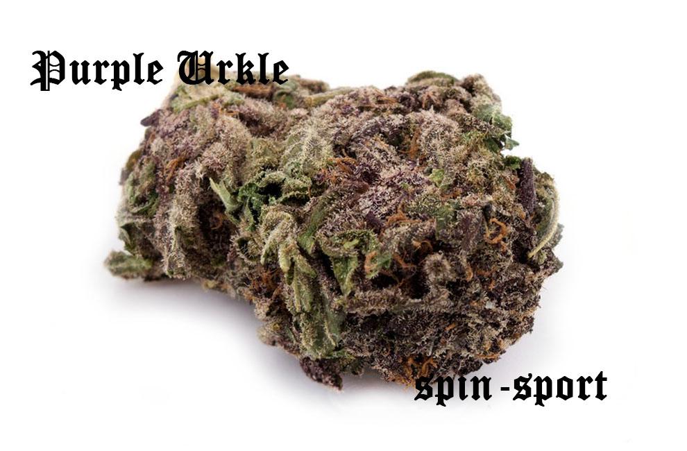 Purple Urkle Marijuana Strain