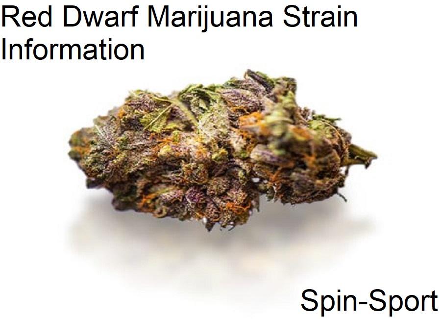 Red Dwarf Marijuana Strain Information
