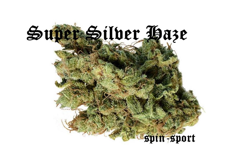 Super Silver Haze Strain