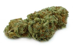 Super Glue Marijuana Strain