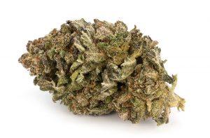 Vixen Marijuana Strain