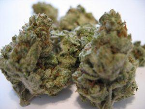 White Smurf Marijuana Strain Inform