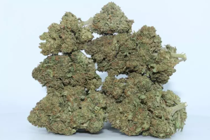 holly weed strain