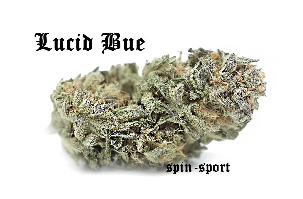 Lucid Blue Marijuana Strain