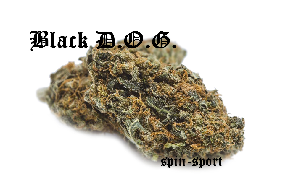 Black D.O.G Marijuana Strain